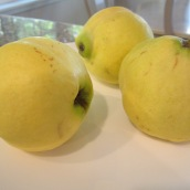 Beh (Quince )