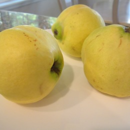 Beh (Quince)